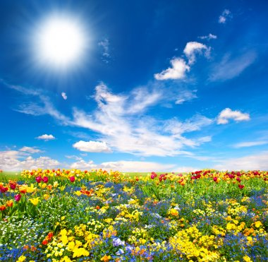 Flowerbed. colorful flowers over blue sky