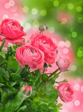 beautiful pink flowers over blurred background