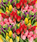 Fotografia fiori di tulipano primavera fresca con gocce dacqua