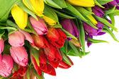 bouquet di Tulipani multicolore su sfondo bianco