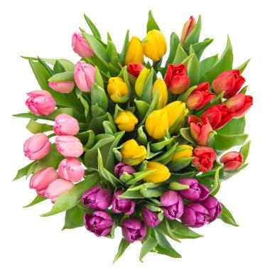 bouquet of fresh multicolor tulips