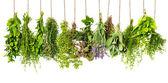 gyógynövények lóg a elszigetelt fehér. élelmiszer-összetevők