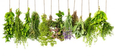 Herbs hanging isolated on white background. food ingredients stock vector