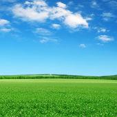 Zelená pole a modré nebe