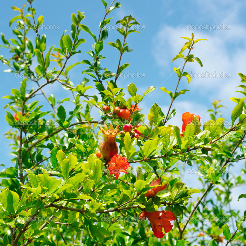 воздух картинка плоды и цветы на одном дереве марте