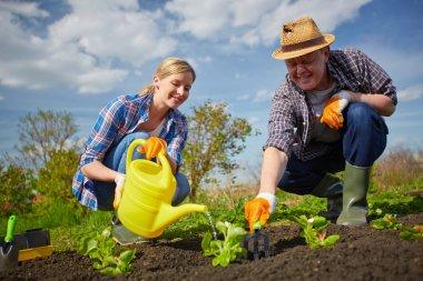 Farmers watering plants