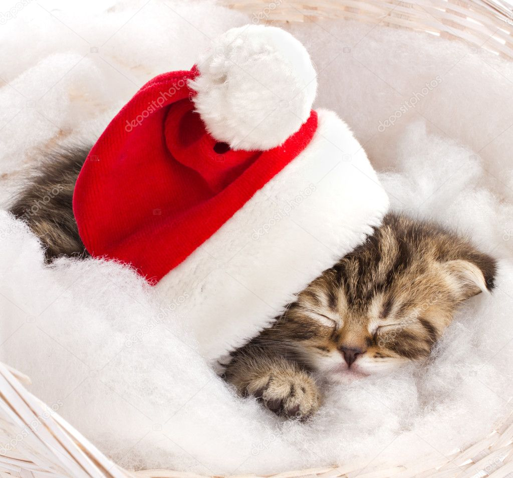 cat sleeping on christmas