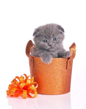 cute kitten in shiny basket
