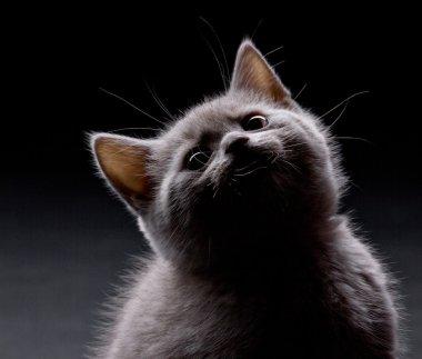 amusing fumose little cat