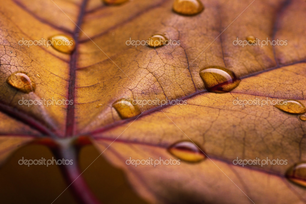 closeup view of autumn leaf with water drops