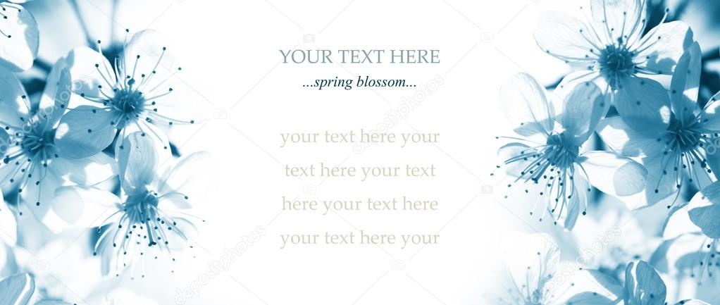 cherry blossom, postcard