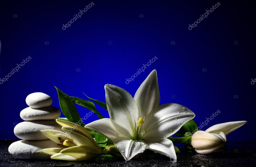 lily with buds and pile of stones
