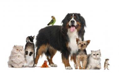 "Картина, постер, плакат, фотообои ""группа домашних животных"", артикул 16981557"