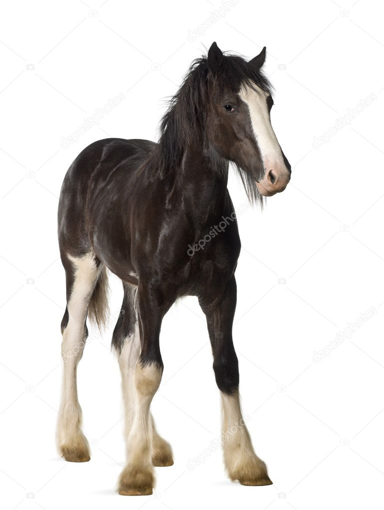 3 Reasons Shouldnt Ignore Outdoor Advertising as well Unique Blank Laptop Vector Design moreover Stock Photo Shire Horse Foal Standing Against additionally Stock Photo Calendar Tomorrow White Background Image11459230 additionally Two Bus Shelter Mockups. on blank billboard page