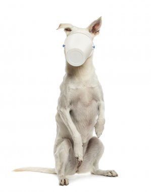 Crossbreed dog standing on hind legs with bucket on its face aga