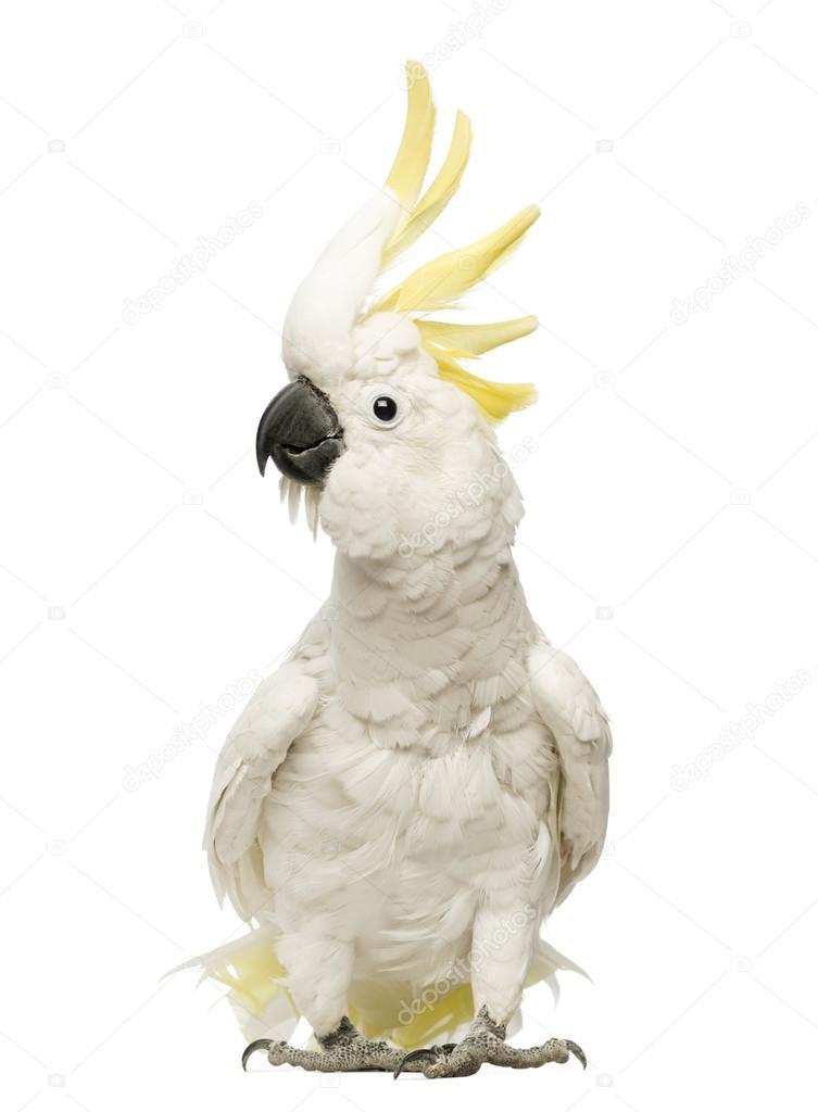 cockatoo #hashtag