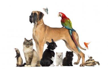 "Картина, постер, плакат, фотообои ""группа домашних животных - собака, кошка, птица, рептилия, кролик, изолированные на виски "", артикул 24523447"
