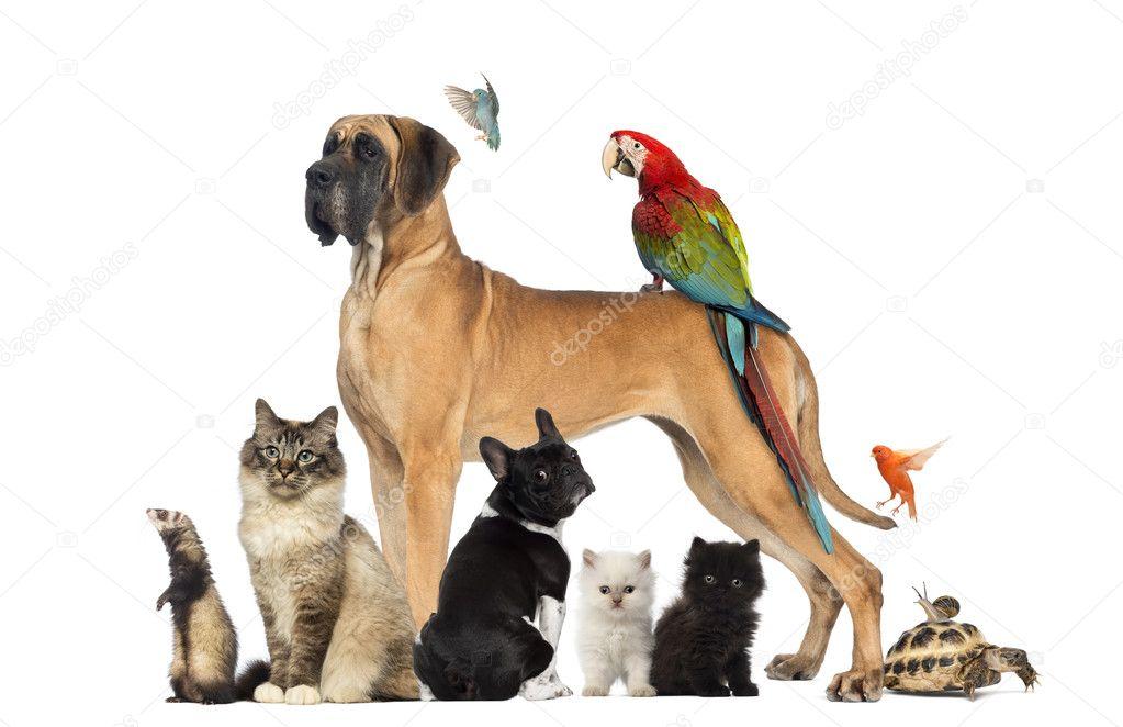 pets #hashtag