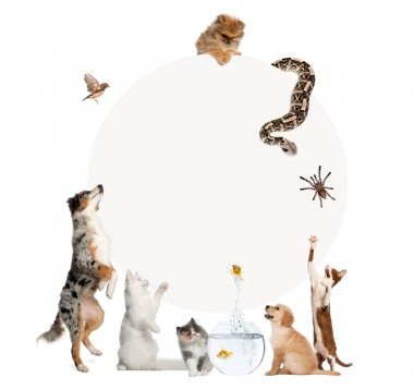 Group of pets surrounding a blank sign, isolated on white