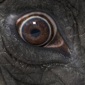 Fotografie Macro of an African elephants eye