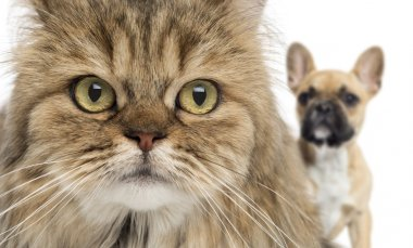 Close-up of a cat and dog hiding behind, isolated on white