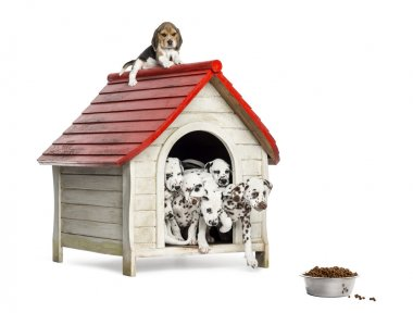 Group of dog puppies playing with a dog kennel, isolated on whit