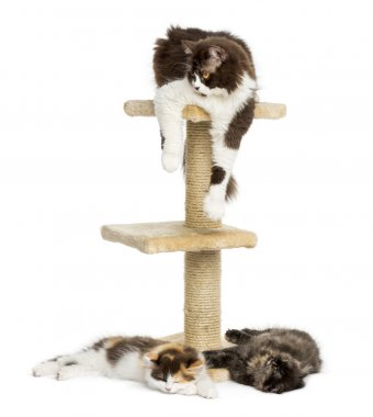 Cats lying around and on a cat tree, isolated on white