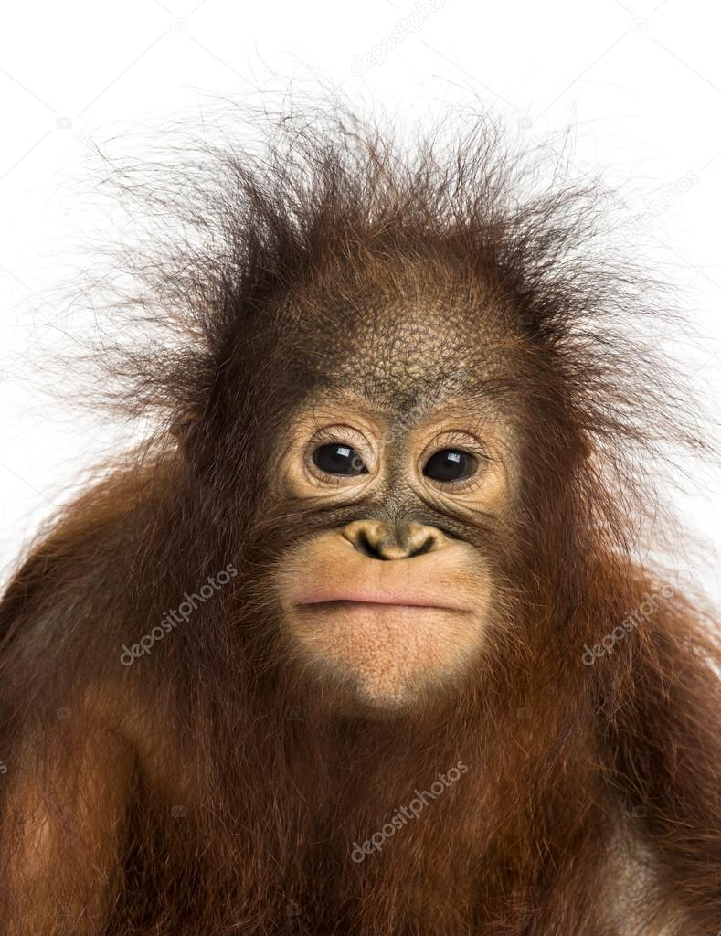 orangutan #hashtag