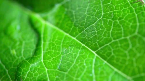 kapky vody na povrchu zelená listová