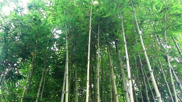 bambusové kmínky Les