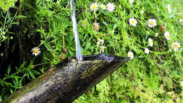 tube de bambou et de l 39 eau qui coule dans le jardin japonais vid o wlad74 32911705. Black Bedroom Furniture Sets. Home Design Ideas