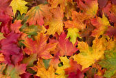 Photo Fall leaves background