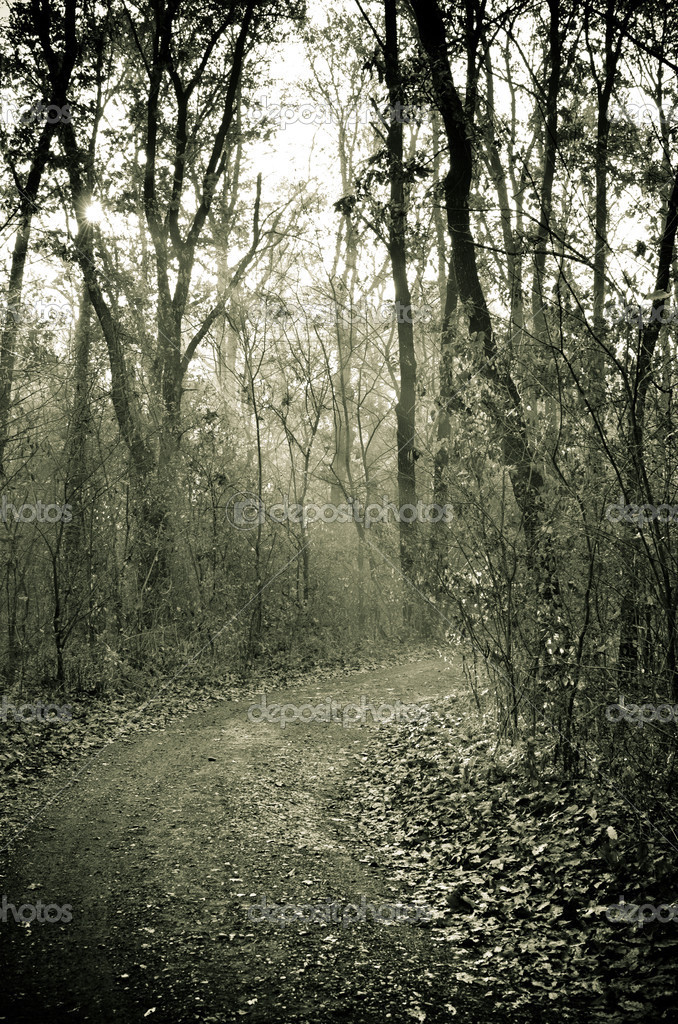 Фотообои Mysterious forest path