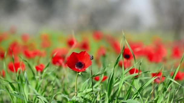 zelené trávy a červený květ