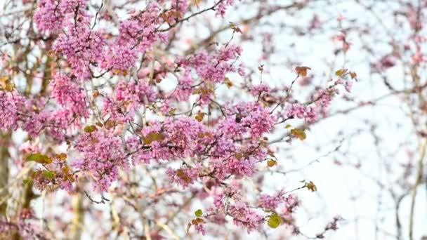 růžový větve na vítr