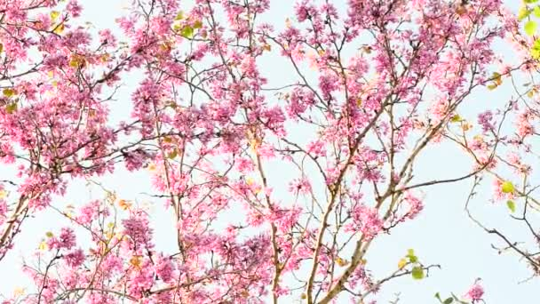Pink flowers on pale blue background