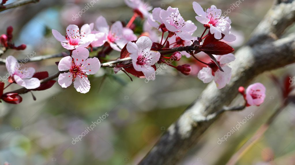 Spring composition of nature