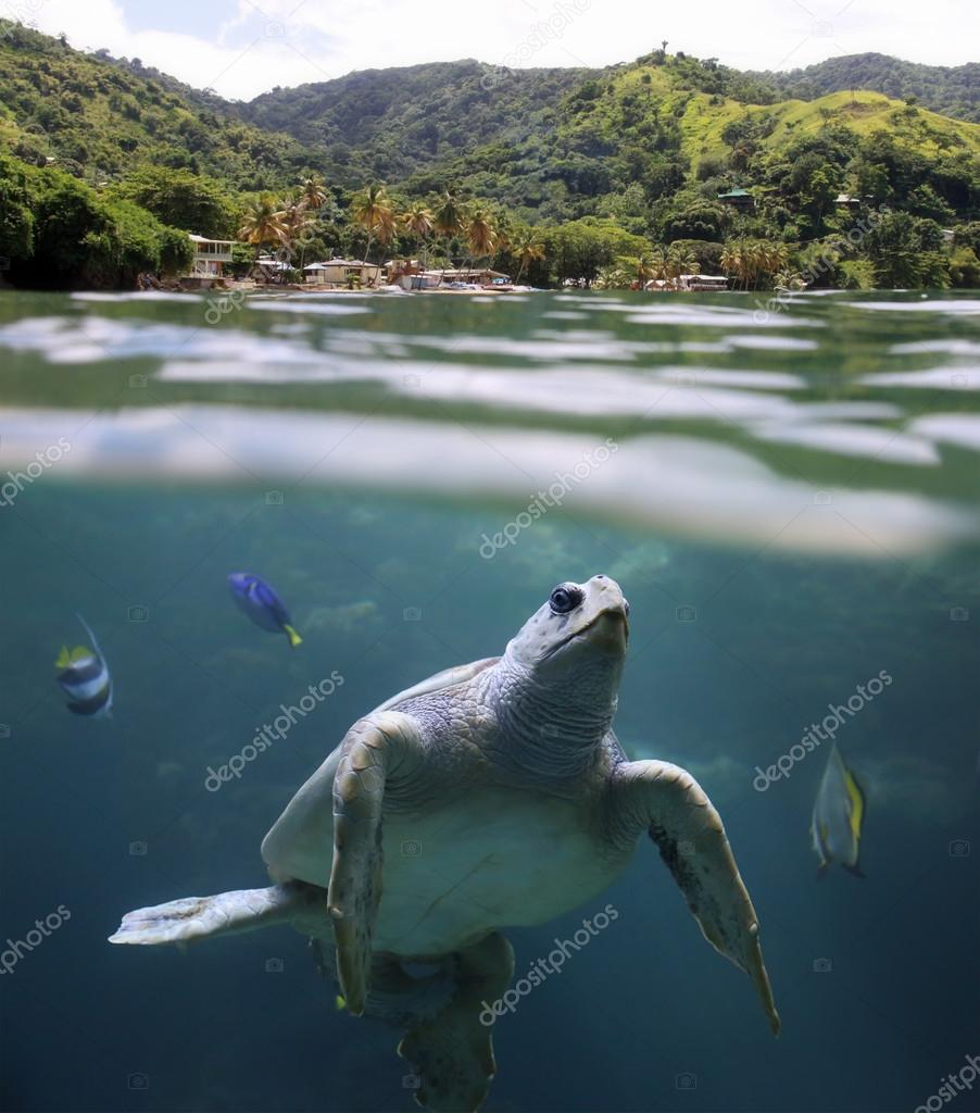 Sea turtle in front of tropical beach