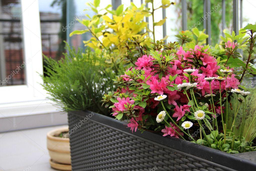 La finestra di stefania quali sono i fiori più adatti da mettere