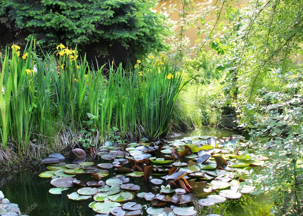 House garden with small pond
