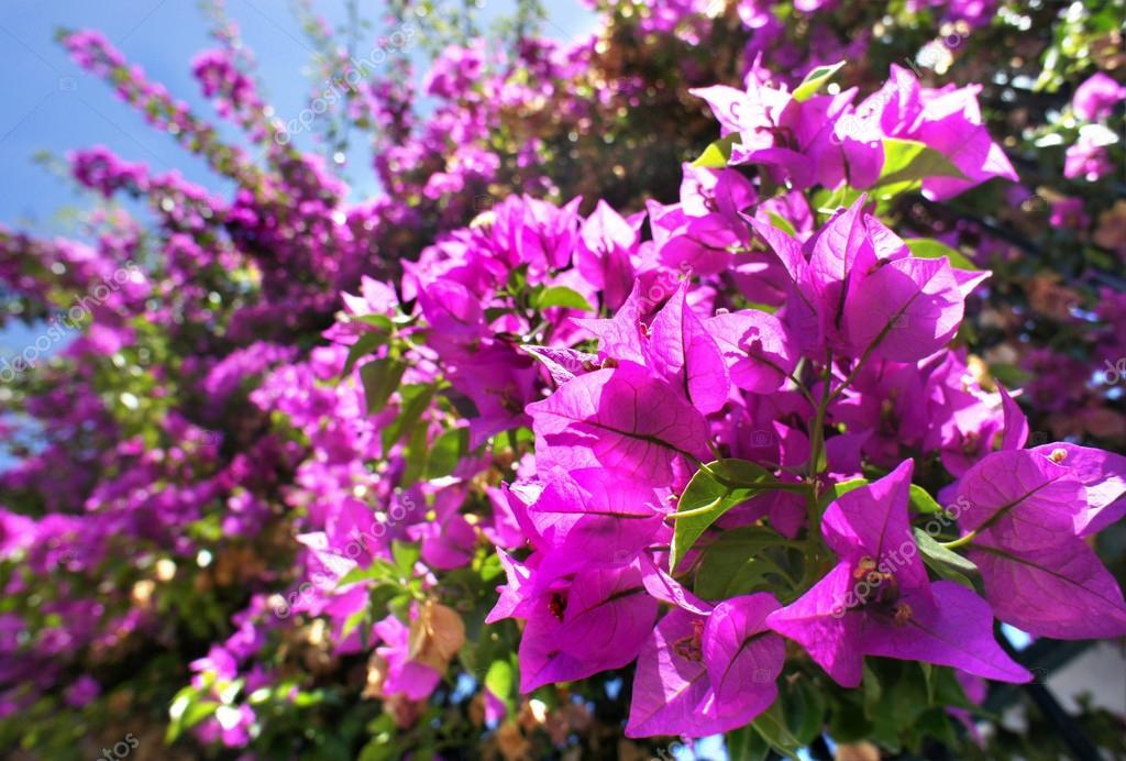Beautiful mediterranean terrace with pink flowers stock photo beautiful mediterranean terrace with flowers photo by tannjuska mightylinksfo