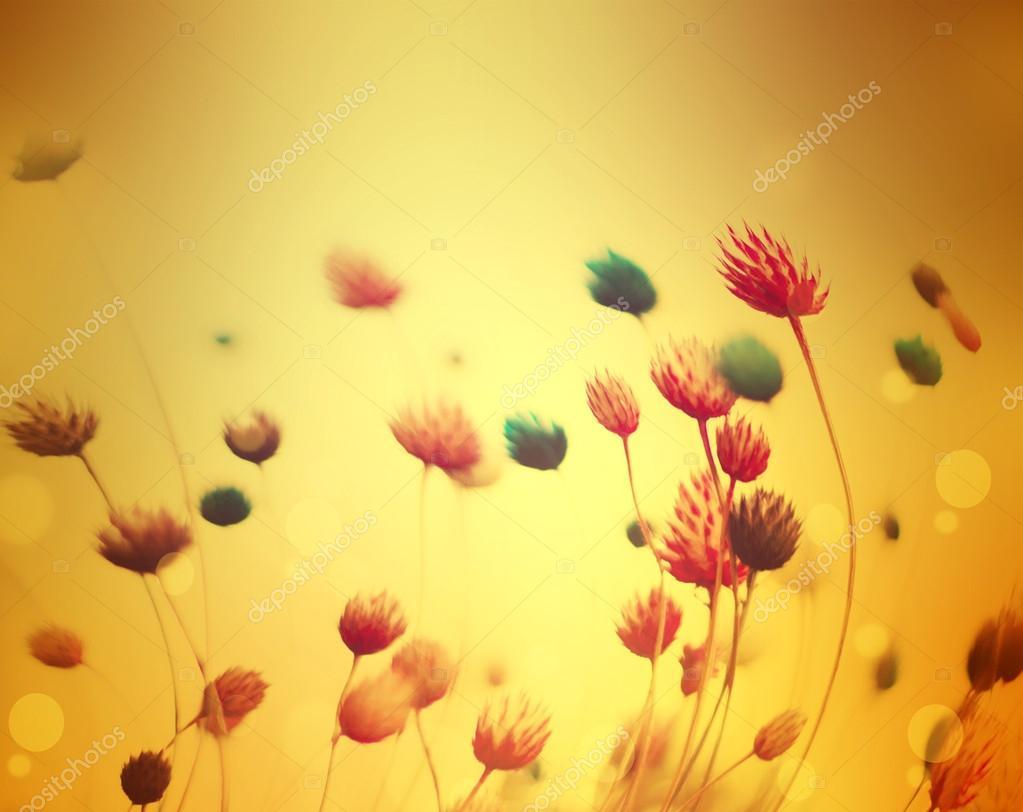 Fondo Flor Abstracta Defocused Flores En Movimiento Fotos De