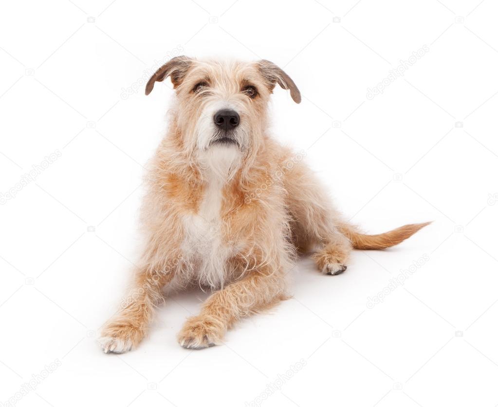 Mischling große struppigen Hund Festlegung — Stockfoto ...