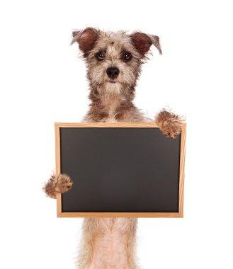 Terrier Mix Dog Holding Blank Chalkboard