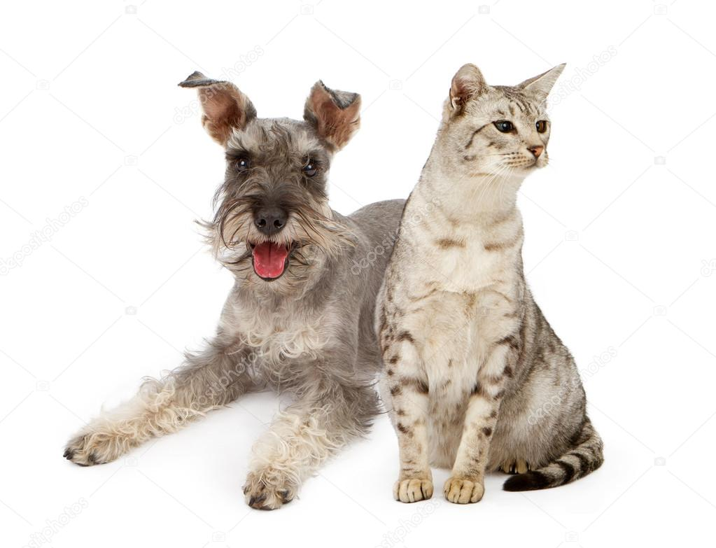 Dog Cat Breed Together