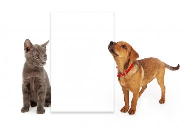 Puppy and kitten looking at blank sign