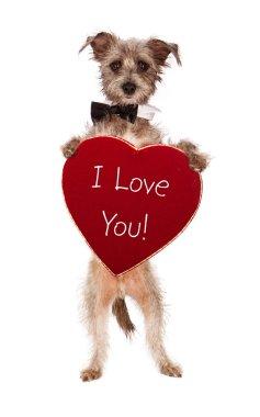 Terrier Dog Holding I Love You Heart