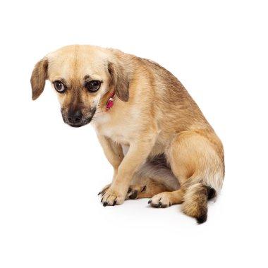 Shy Rescue Dog