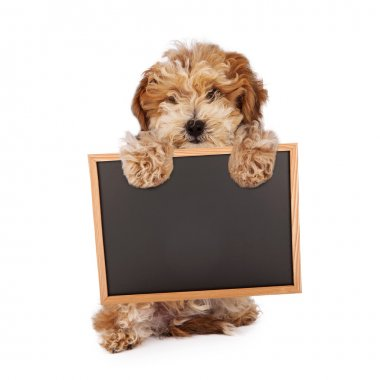 Havanese puppy holding blank chalk board sign