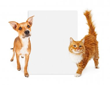 Orange cat and dog with blank sign